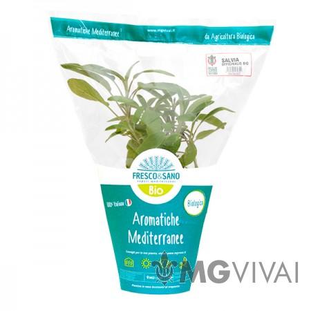 Salvia Officinalis Bio