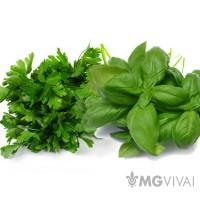 Gli Odorosi Bio: Basilico, Prezzemolo e Rosmarino