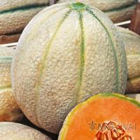Melone Giallo Retato