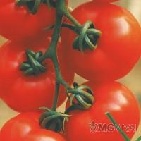 Pomodoro a Grappolo Rosso