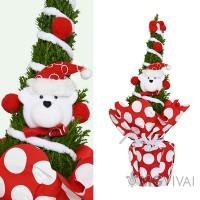 2 Alberi di Natale Veri